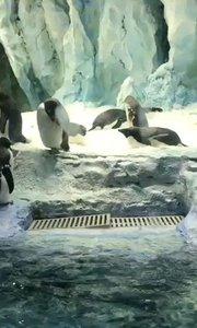珠海长隆海洋王国续集8:企鹅?企鹅