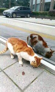 路遇流浪猫,牛肉干捐出