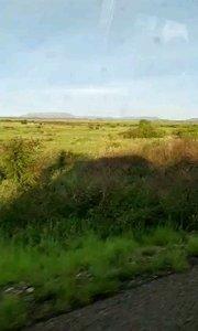 非洲续集2:非洲大草原