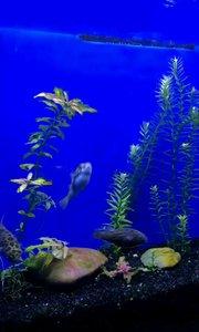 一群活泼可爱的(๑• . •๑)小河豚鱼