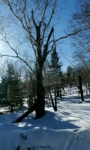 吉林长白山天池美景续集4:林海雪原