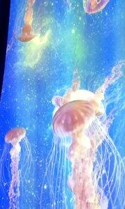 哇咔咔,如梦似幻的水母,好像外星生物!