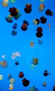 上海海洋公园多彩水母,不一样的世界!