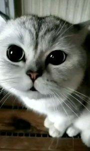 猫语翻译:我饿,好饿饿,我快饿死了……