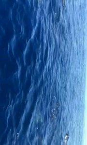 非洲毛里求斯海豚