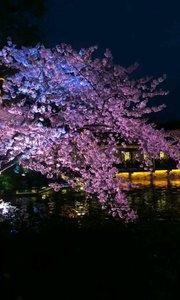 无锡樱花谷美轮美奂的夜景