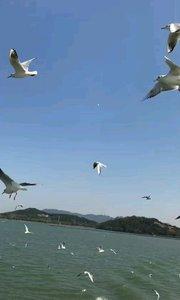 无锡鼋头渚自由自在的水鸟,和谐自然