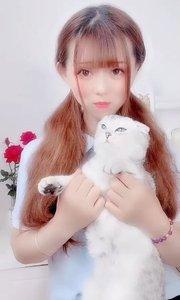我的小猫咪谁要?