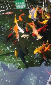 财神庙许愿池